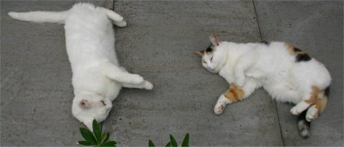cats lying on the warm concrete